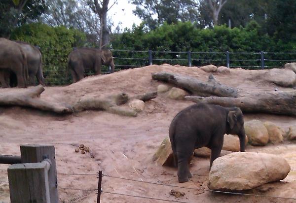 2015-09-08-rmzg-elephants