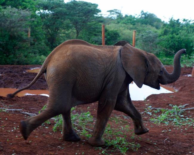 baby-elephant-sm
