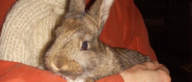A baby bunny