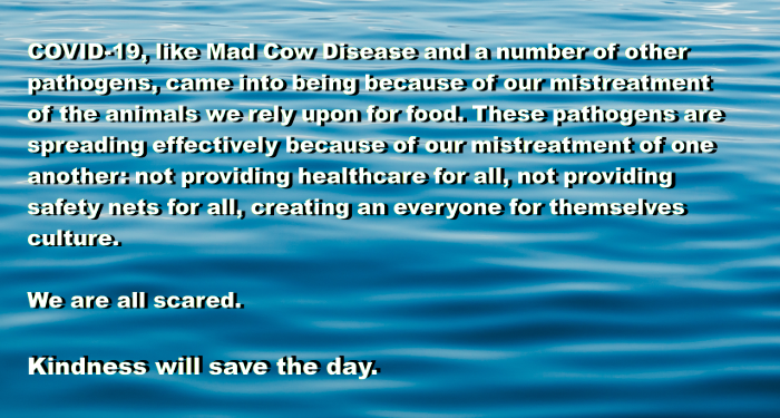 COVID-19, like Mad Cow Disease and a number of other pathogens, came into being because of our mistreatment of the animals we rely upon for food. These pathogens are spreading effectively because of our mistreatment of one another: not providing healthcare for all, not providing safety nets for all, creating an everyone for themselves culture.  We are all scared.  Kindness will save the day.